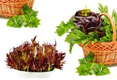 bunch of different red and green  lettuce, spinach with parsley - stock photo
