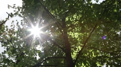 Sunbeam Piercing through Leaves of Trees. - stock footage