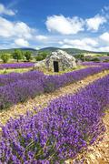 Lavender world Stock Photos