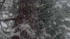 Green trees in the forest and snow Stock Footage