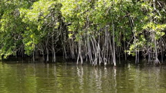 Caribbean mangroves Stock Footage