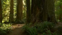 Stock Video Footage of Trail in Jedediah Smith Redwoods State Park, California (pan)