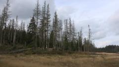 Transforming moory landscape dead trees mountain range Harz - stock footage