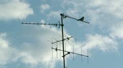 Pigeon on Digital Television Radio Antenna Stock Footage