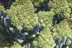 green romanesca cauliflower as among trendy vegetables and foods found in far - stock photo