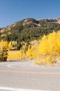 Aspen color at bend in the road Stock Photos