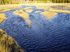 watery marsh - stock photo