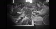 Women sorting tobacco leaves in factory Stock Footage