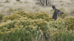 deer running away run off - stock footage