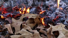 Closeup of Fire Consuming Dry Leaves in Autumn - stock footage