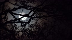 Spooky atmospheric moonlight through tree branches Stock Footage