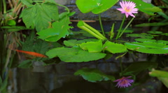Flower Reflection in Pond Stock Footage