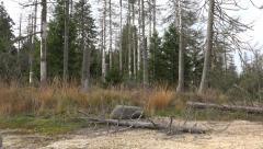4k Dead forest tilt in autumn season nature mountain range Harz Stock Footage