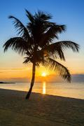 palm tree on a beach at sunset - stock photo