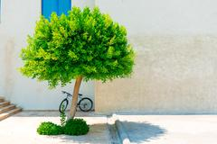 Urban landscape, lonely tree and bike Stock Photos