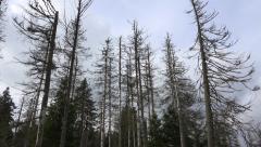 Dead forest tilt in autumn season nature mountain range Harz - stock footage