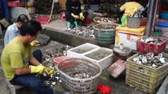 Peel the oyster shell, in Shenzhen, China Stock Footage