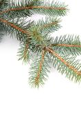 The christmas tree isolated on white Stock Photos