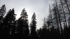 Dead trees and clouds panning in mountain range Harz Stock Footage
