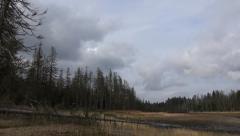 Moor landscape with dead trees pan mountain range Harz Stock Footage