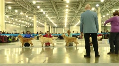 "Int. dog show Russia'14  putjede painted apache November 8, 2014 in IEC ""Crocus Stock Footage"