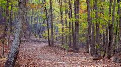 Mountain path autumn 1 Stock Footage