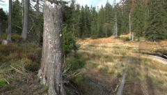Path with spring of lake in a moor nature of mountain range Harz - stock footage