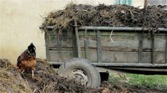Wooden trailer with manure Stock Footage