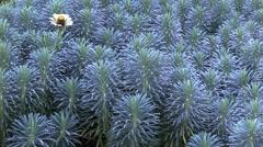VanDusen Botanical Garden Plant Stock Footage
