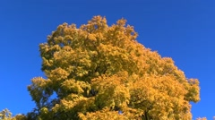 VanDusen Botanical Garden Tree - stock footage