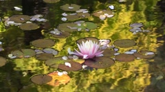 VanDusen Botanical Garden Lotus Pond Stock Footage