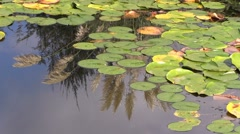 VanDusen Botanical Garden Pond Stock Footage