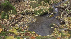 Mountain creek with fallen leaves in autumn in slow motion Stock Footage