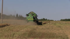 Combine harvest ripe wheat barley and stork birds in field Stock Footage