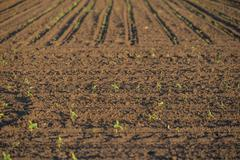 Cultivated land with plants Stock Photos