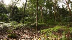 Temperate Rainforest Australian Landscape - stock footage