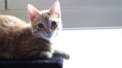 Cat kitten cute Arkistovideo