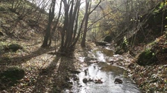 Autumn landscape with a river in slow motion Stock Footage