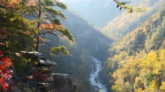 Autumn scene in the North GA Mountains HD 4K Stock Footage