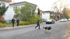 K9 police unit crossing the street in peaceful residential neighborhood Stock Footage