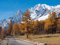 mountain road in fall. in background the forest and the snowy peaks of mont b - stock photo