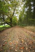 Road in a forrest with autumn leaves Stock Photos