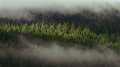 Cloudy Forest Timelapse FullHD - stock footage