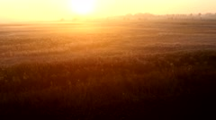 Sunrise over the meadow in a foggy autumn day. Aerial shot. Stock Footage