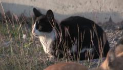 Scared Feral Cats Stock Footage