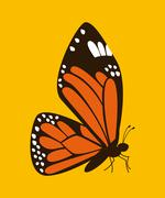 butterfly graphic design , vector illustration - stock illustration