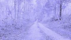Old Road Snow Fall Changing to Winter Wonderland Stock Footage