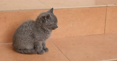 4K video of small gray furry kitten sitting on tiles looking around - stock footage