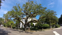 Big oak tree in charming old neighborhood in Charleston, SC Arkistovideo