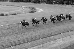 horse racing jockeys track - stock photo